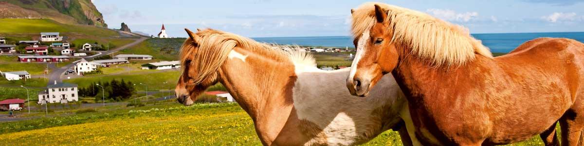 Slider Rundreise Island Ponys