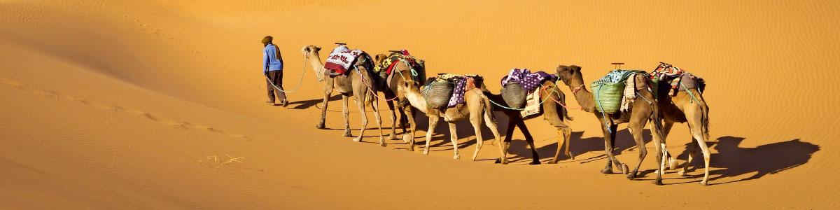 Kamele in der Wüste von Marokko
